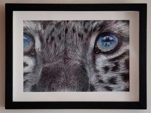 Snow Leopard - Sarah Caisey
